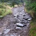 Drumul care ne obliga la intoarcere