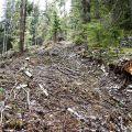 Lipseau paduri intregi care greu au crescut pe un astfel de teren dificil.