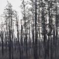 Si Siberia imprejurul nostru