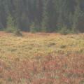 TURA PRIN BANAT -  Valcan - Tarcu    -    Septembrie 2012